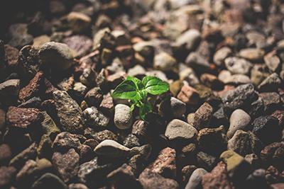plant growing on rocks